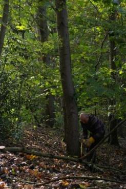 Volunteer at work in the woods 1