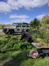 Volunteer in wildflower garden