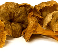 Yellow Foot Mushrooms.