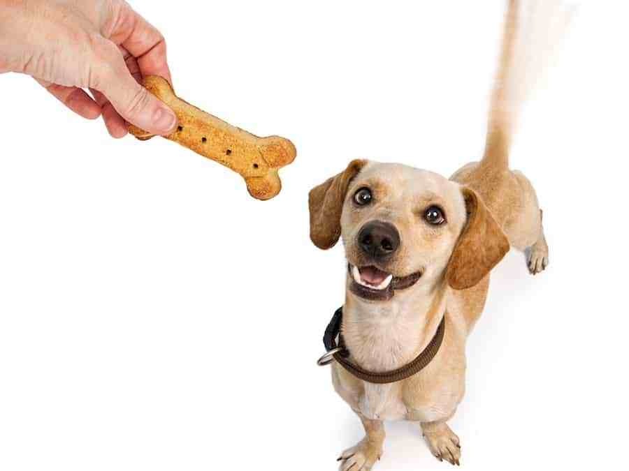 What Is Sales Promotion; The Tail That Wags The Dog