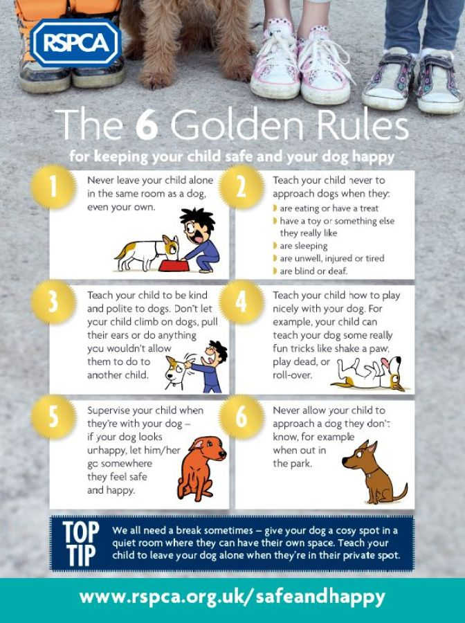 RSPCA Keeping_kids_safe_infographic