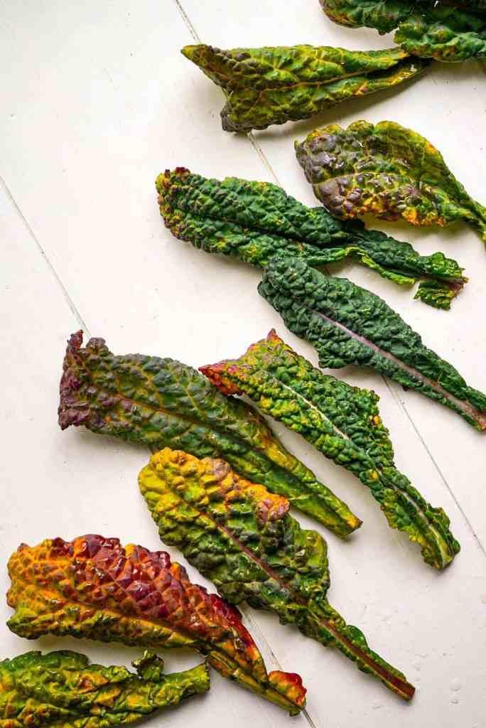 A bunch of italian kale.