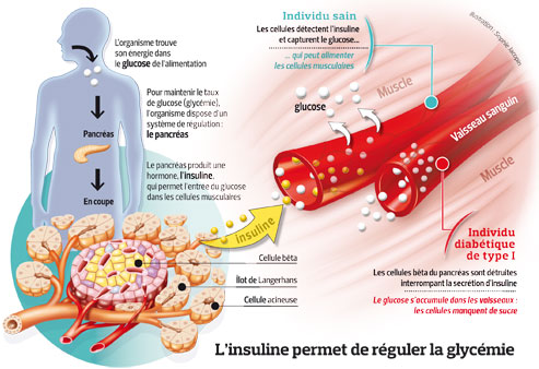 COMPRENDRE LE DOSAGE DE L'INSULINE