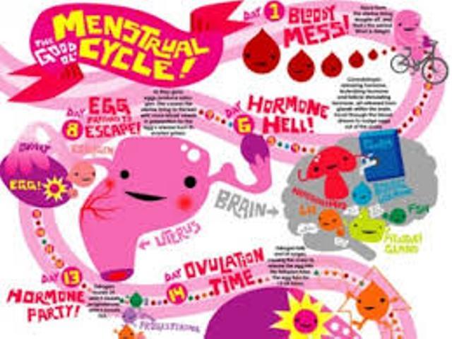 DIABETES AND MENSTRUAL CYCLE