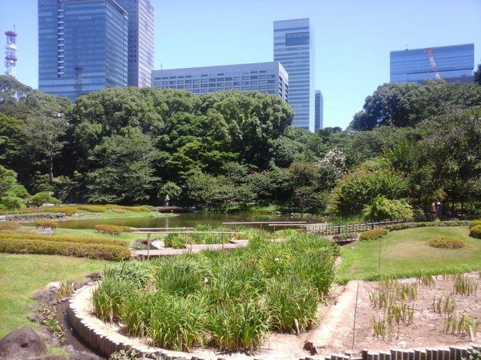 Jardín entre cemento