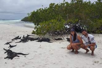 Iguanas marinas en Isla Santa Cruz