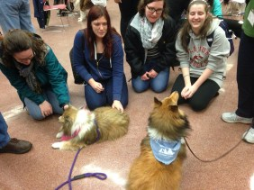 Stressed-out students are being loved on by shelties, retrievers, mixed-breeds, and more in the Wicomico Room of GUC! Furry-love from these therapy dogs is known to reduce stress-levels and provide support before a huge final.