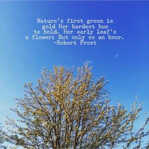 Robert Frost - poetry