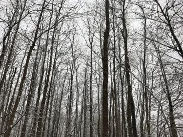 Winter Forest, 2017