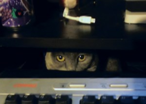 a cat protecting the keyboard hacked by hacker attack