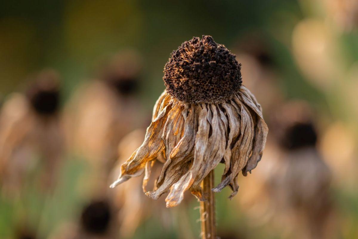 Photo by Pawe? Czerwi?ski on Unsplash dried up flower