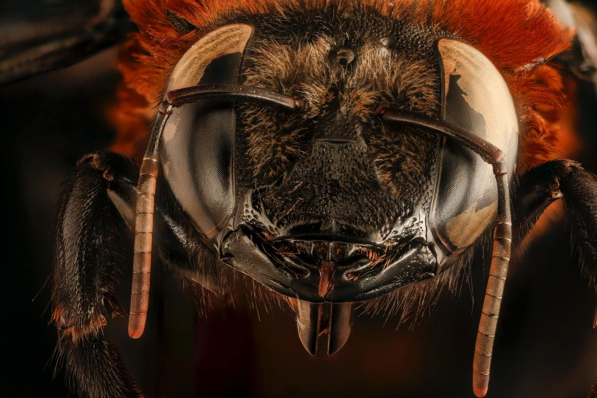 A very close up of a fly