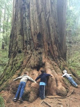 Redwood Nat'l Forest