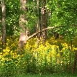 Woods Near my House :)