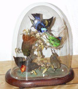 mlParlor_Birds
