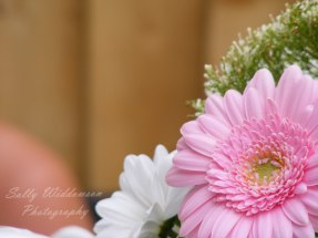 close up of pale pink gerbera flower