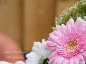 close up of pale pink gerbera flower
