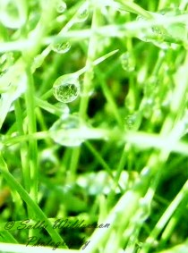 green grass with raindrops close up