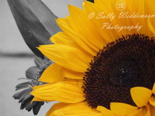 3---Yellow