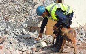 Otro héroe canino: Kublay, de la Policía Federal