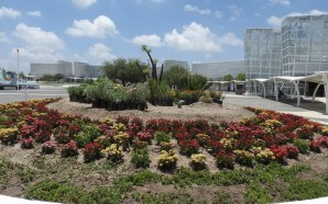 Crean jardines polinizadores para el paso de la Mariposa Monarca.