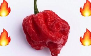 ¿Qué le pasa a tu cuerpo si comes el chile…