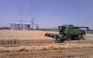 Obtienen mejores ganancias productores a través de Agricultura por Contrato