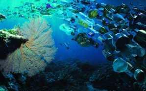 Alertan que en 2050 habría más plástico que peces en…