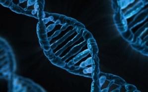 Científicos descubren gen que frena el desarrollo del cáncer