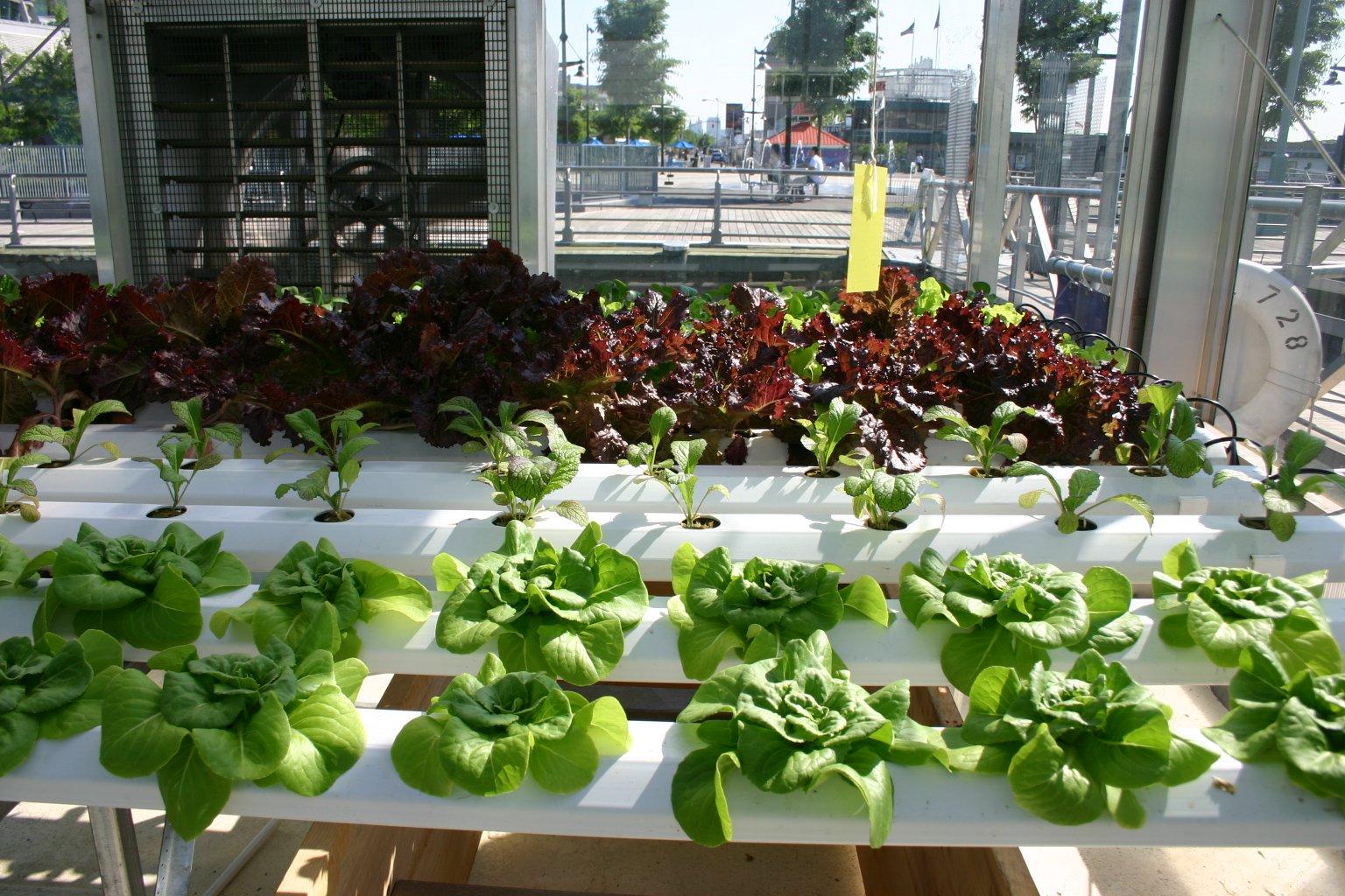 10 Creative Small Indoor Garden Ideas Blogging Junction