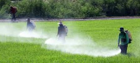 pesticides and environmental health