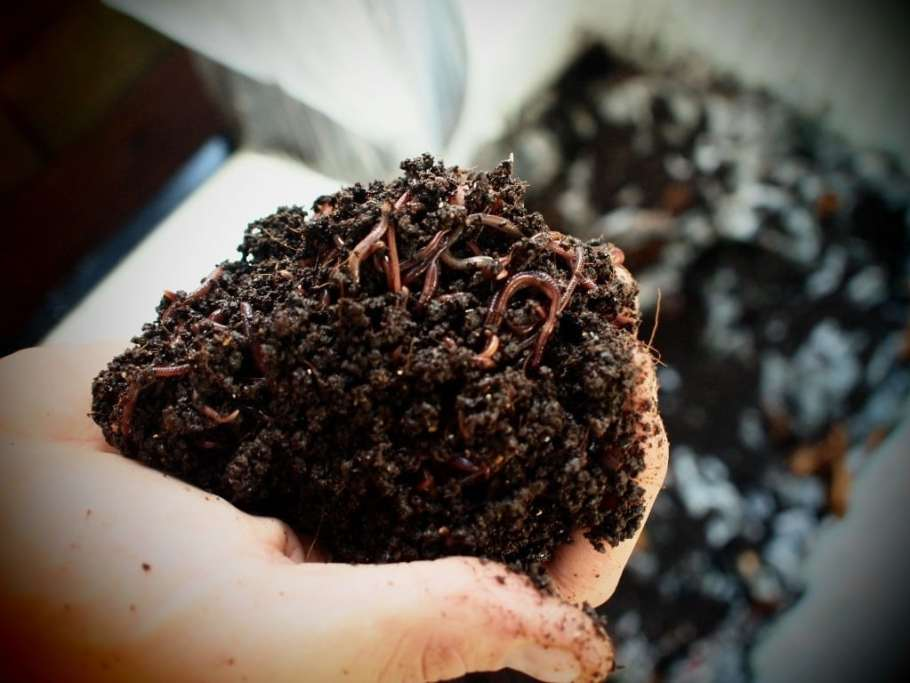 vermicompost school project