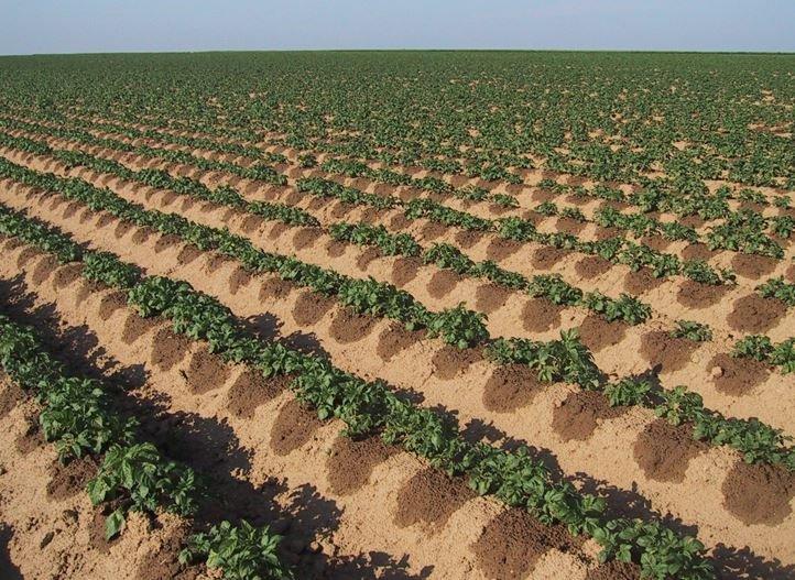 green farming methods