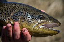 Trout fishing in Iceland is a good substitute for fishing, Trout fishing in Iceland is a good substitute for fishing for Salmon., Salmon Club Iceland