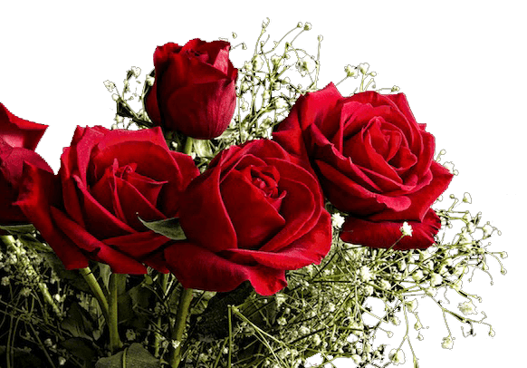 Red-Roses-for-Valentines-DayR