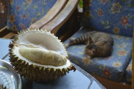 borneo tropical fruit and cat