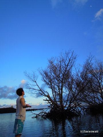 月もいい場所に♪ ヒーリング、素敵に撮れた。
