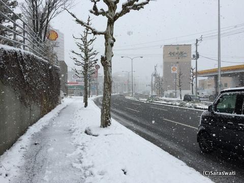 11.14小樽積雪