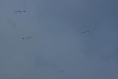 海鳥達が降りてくる