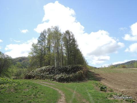 赤井川村の滝本農場