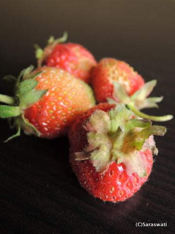 いただきもの・オタモイの苺