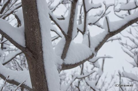 着雪15センチ