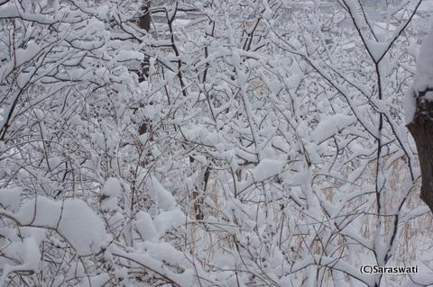 着雪した植物