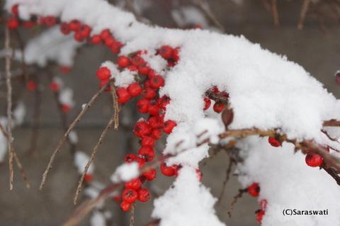 2015年11月のドカ雪