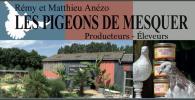 20-les-pigeons-de-mesquer
