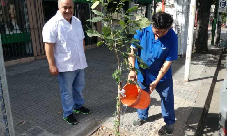 Salta lanza una campaña de recuperación del arbolado urbano - Fuente: Municipalidad de Salta.