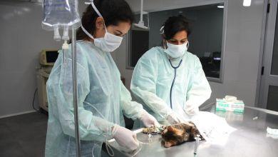 Photo of El Hospital de Salud Animal tuvo resultados muy positivos en el primer mes