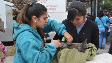 Photo of Se conoció el nuevo cronograma semanal del Quirófano Móvil en los barrios