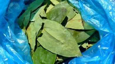 Photo of Secuestraron 28 kilos de hojas de coca en la frontera