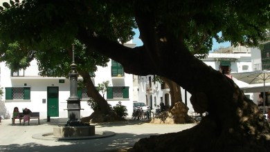 Photo of El Árbol